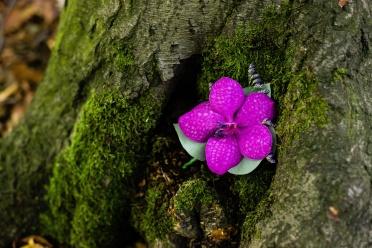 Vanda orchid buttonhole