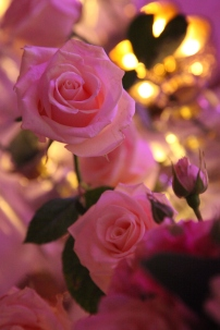 blush and cream by Your London Florist